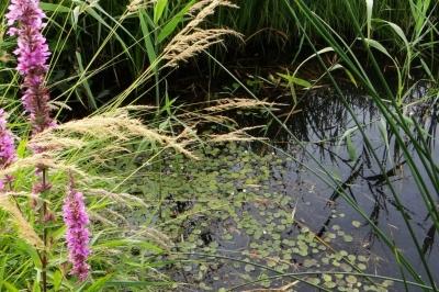 Evenement: Lezing over droogte door waterschap A en Maas